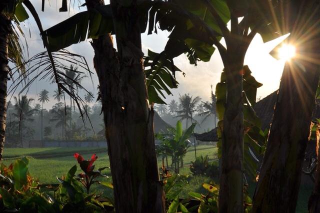 Morning light in my little yard.