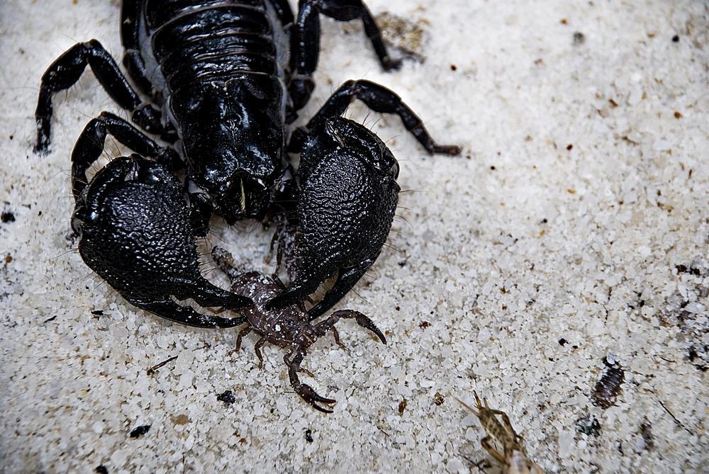 7-19-08 Scorpions.jpg