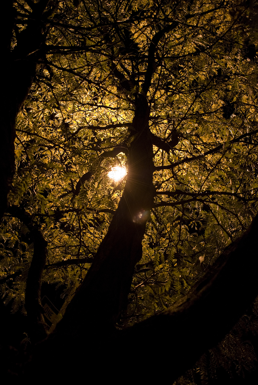9-21-08 Tree.jpg