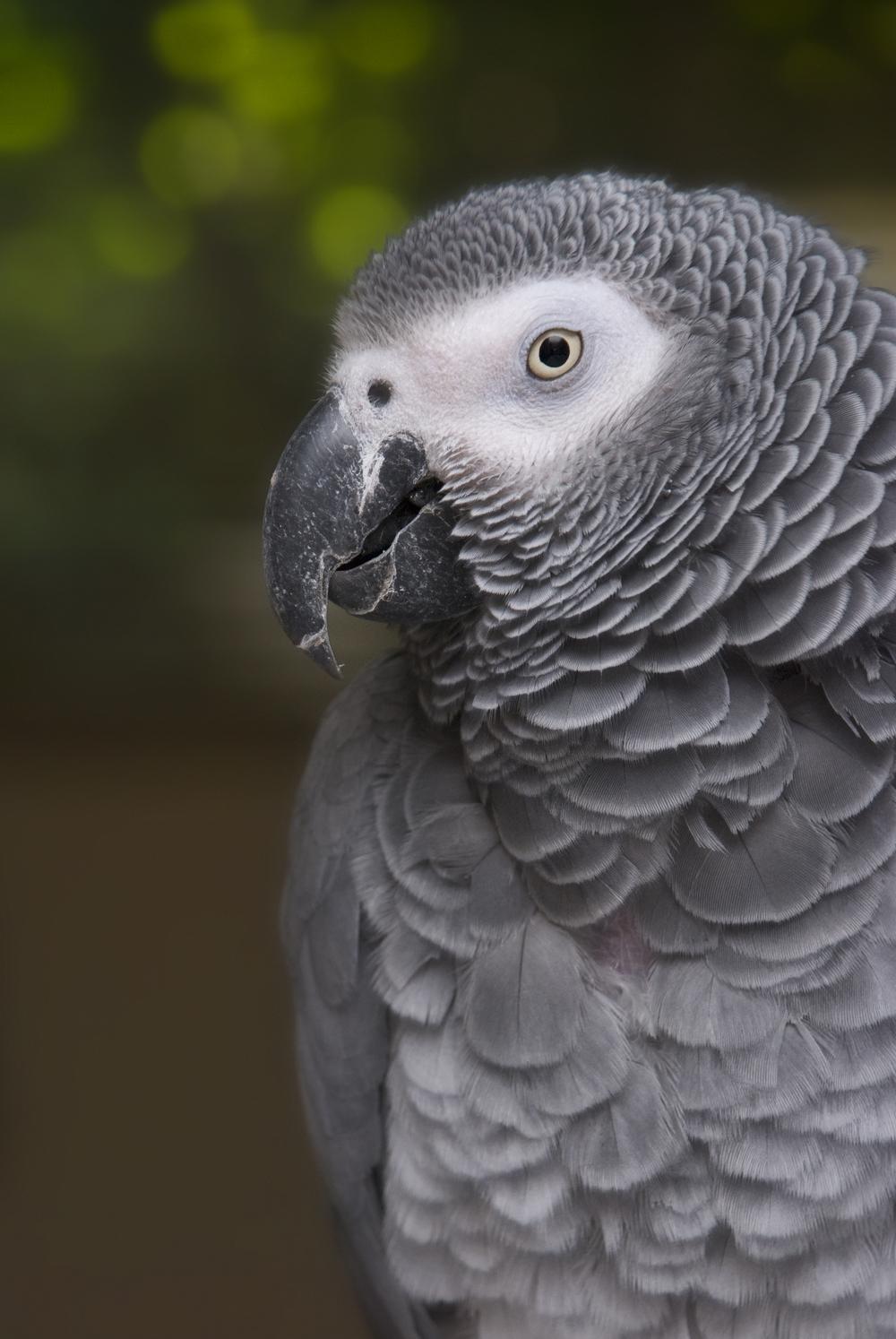 7-3-10 Bird_2.jpg