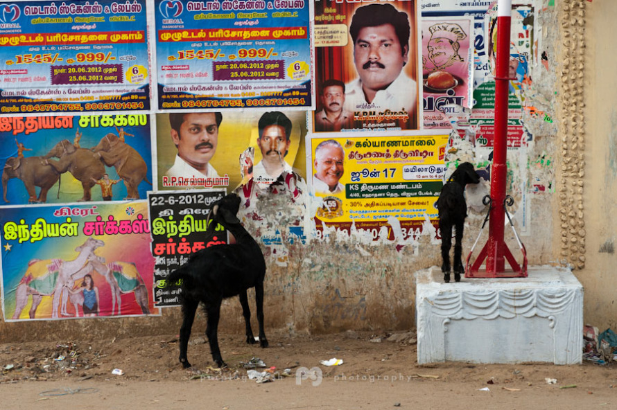 kumbakonam_colors009.jpg