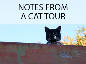 pussyfoot the cats of erskineville � the oc183ca183sion183al