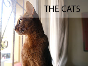 thecats.jpg