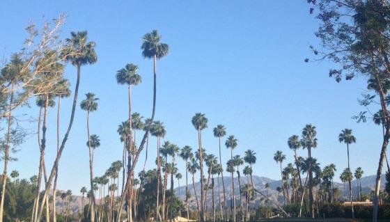 rancho-las-palmas-6.jpg