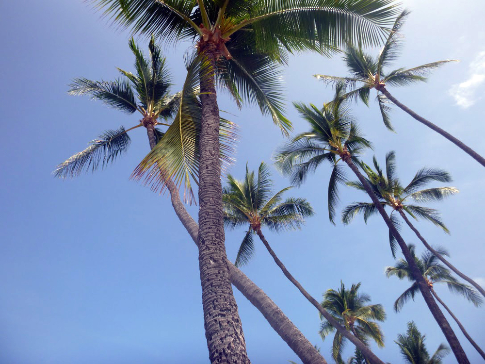 Palms at Magic Sands (La'aloa), Kailua-Kona