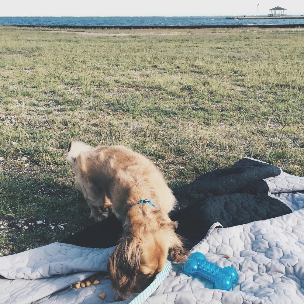 picnics with leo