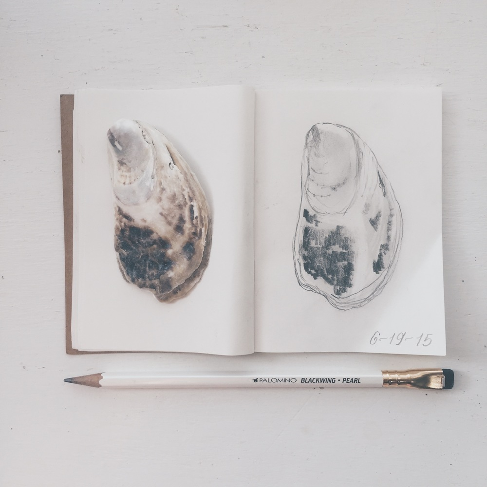 SEASHELL SKETCH BY CHRISTIE JONES OF BEDSIDESIGN