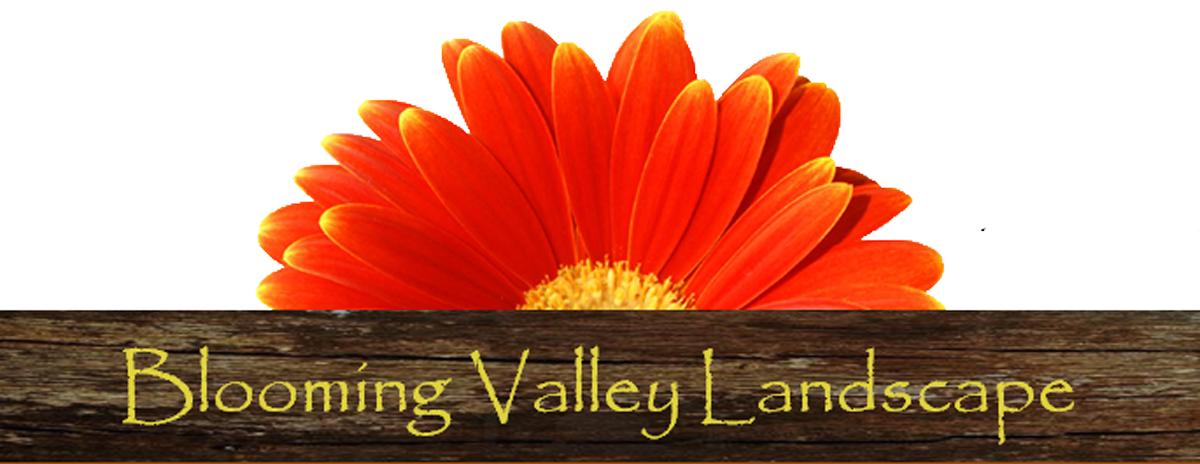 Blooming Valley Landscape
