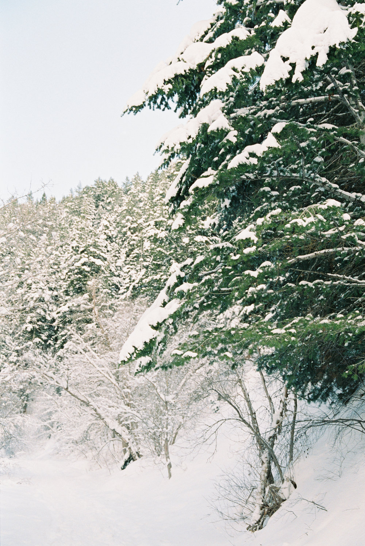 BellaCosa_WinterWonderland-200.jpg