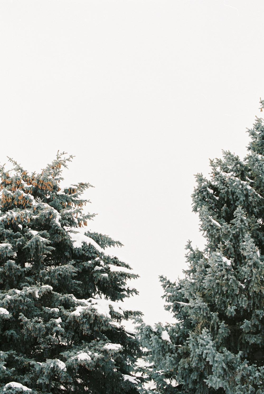 BellaCosa_WinterWonderland-210.jpg