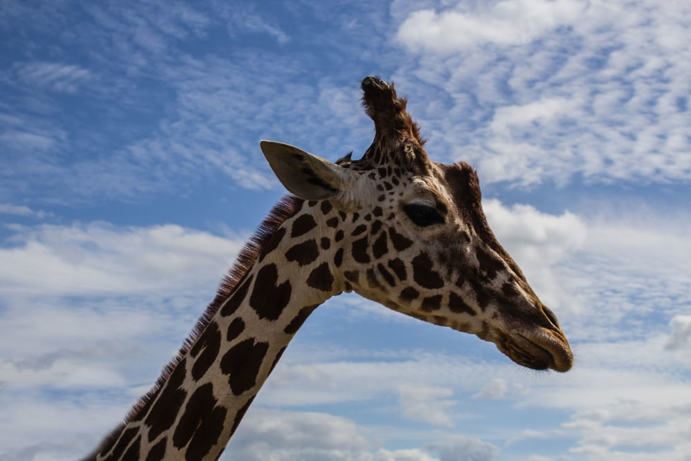 Greatest Story for Business: What's a Business Giraffe and How To Use One To Grow Your Career