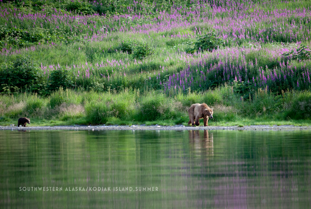 CT5 Southwestern Alaska- Kodiak Island_ summer.jpg