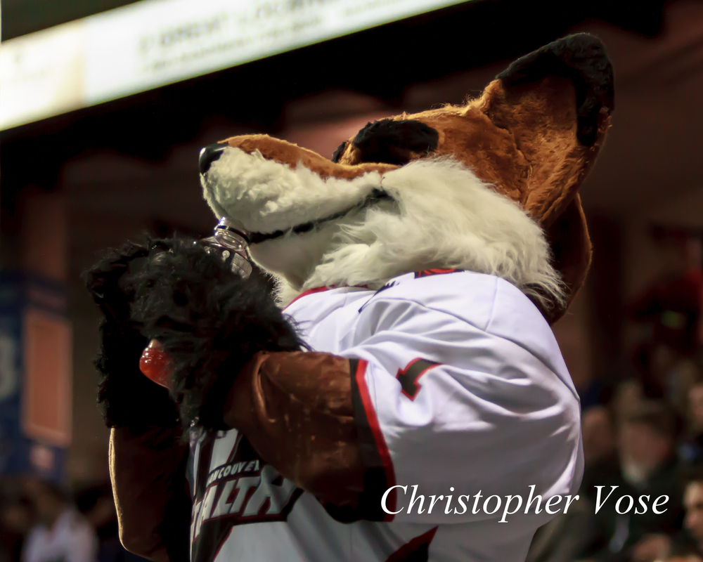 2014-03-21 Bomber the Fox.jpg