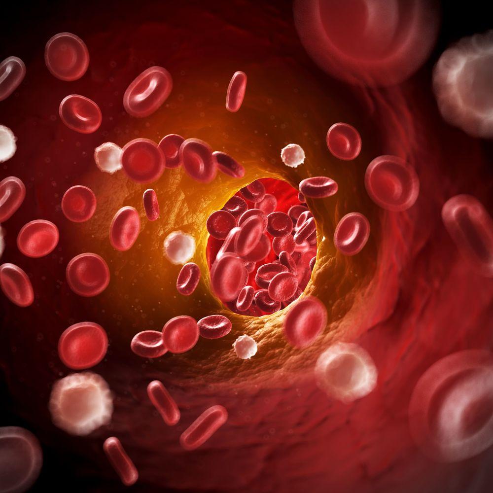 Descubre 10 increibles alimentos que favorecen la circulacion de la sangre en el organismo