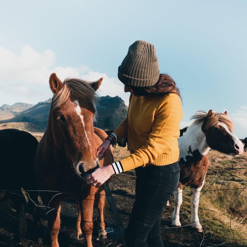 the horse-1.jpg