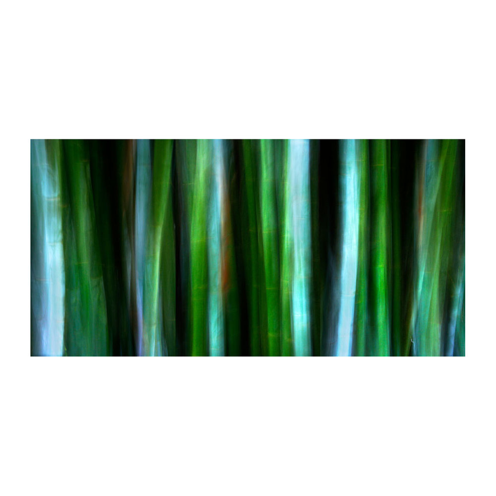 BAMBOO 1, PERSPECTIVE 1, NUMBER 1