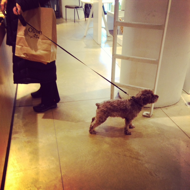 Dogs in shops. I think I like it.
