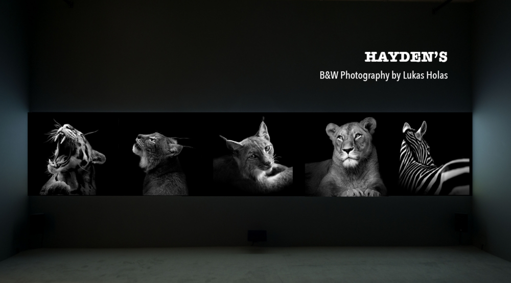 Haydens_LukasHolas