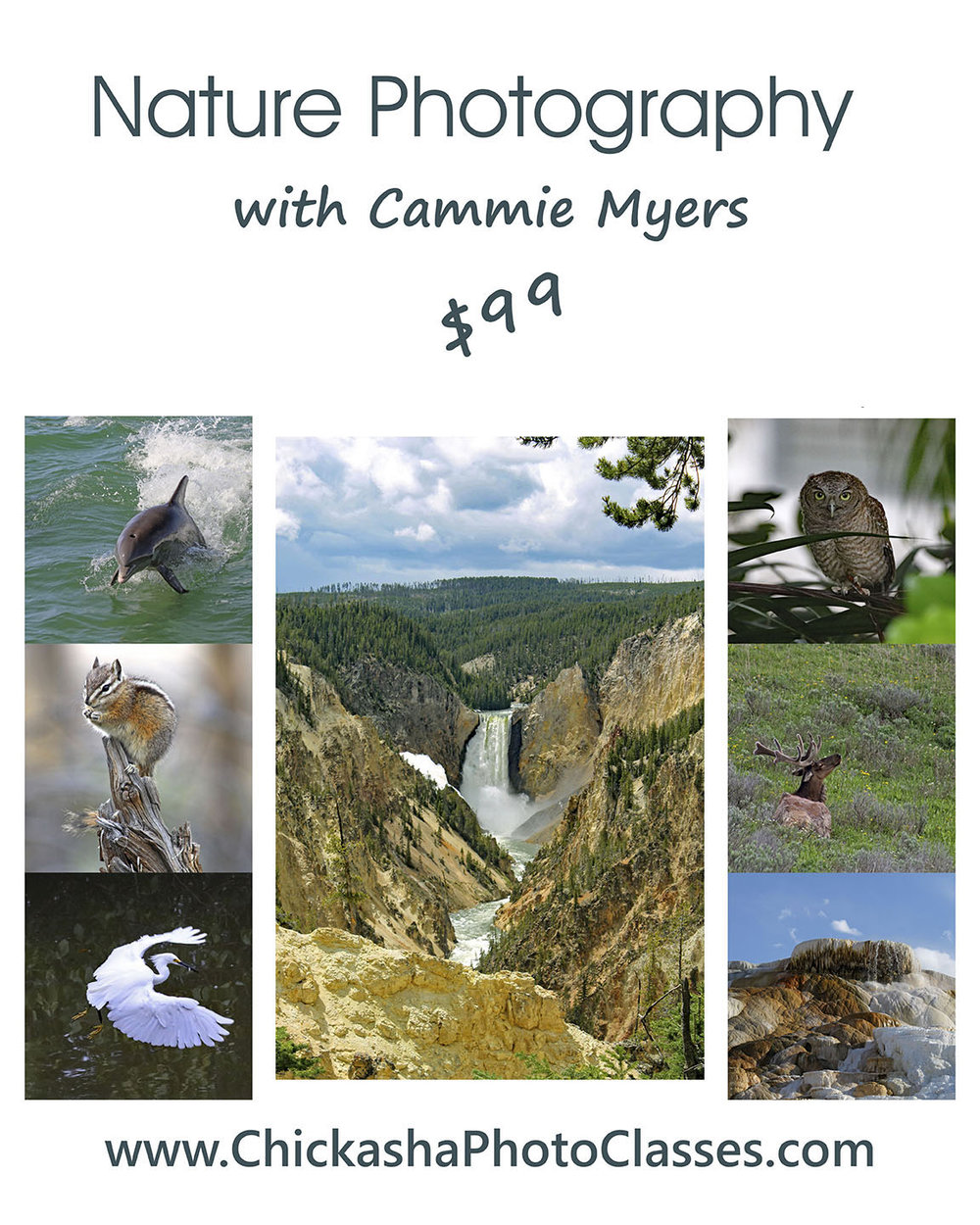 Cammie Myers nature photography poster 72 res WEB jpg.jpg