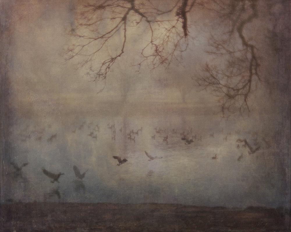 Geese & Fog ii