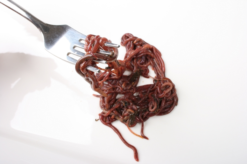 Squishy, slimy, salty, wiggly, like spaghetti that's alive... there are plenty of ways to make eating worms sound truly YUCKY