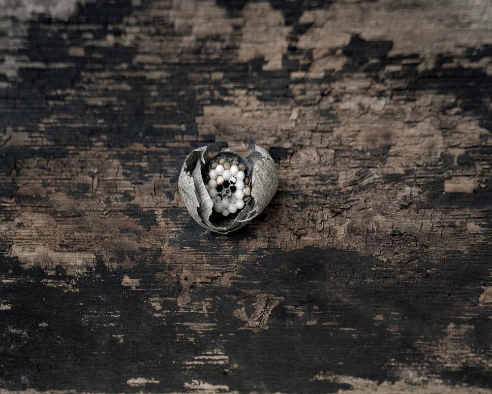 Hornet's Nest : study II