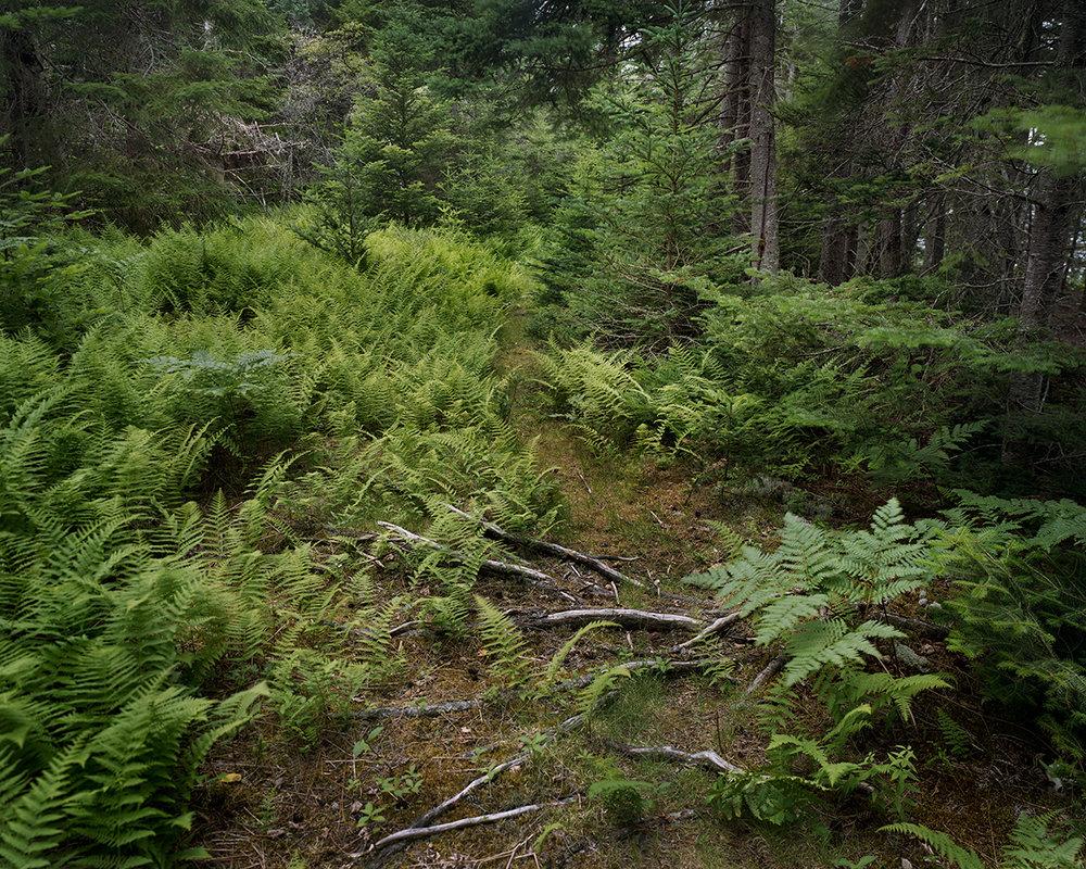 Fern Path