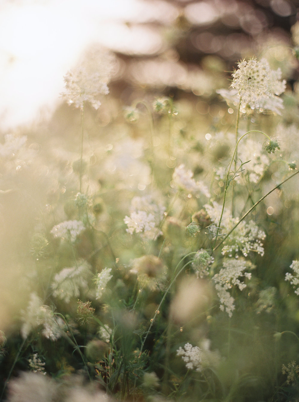 Wild Green Yonder Flowers | Sally Pinera Photography