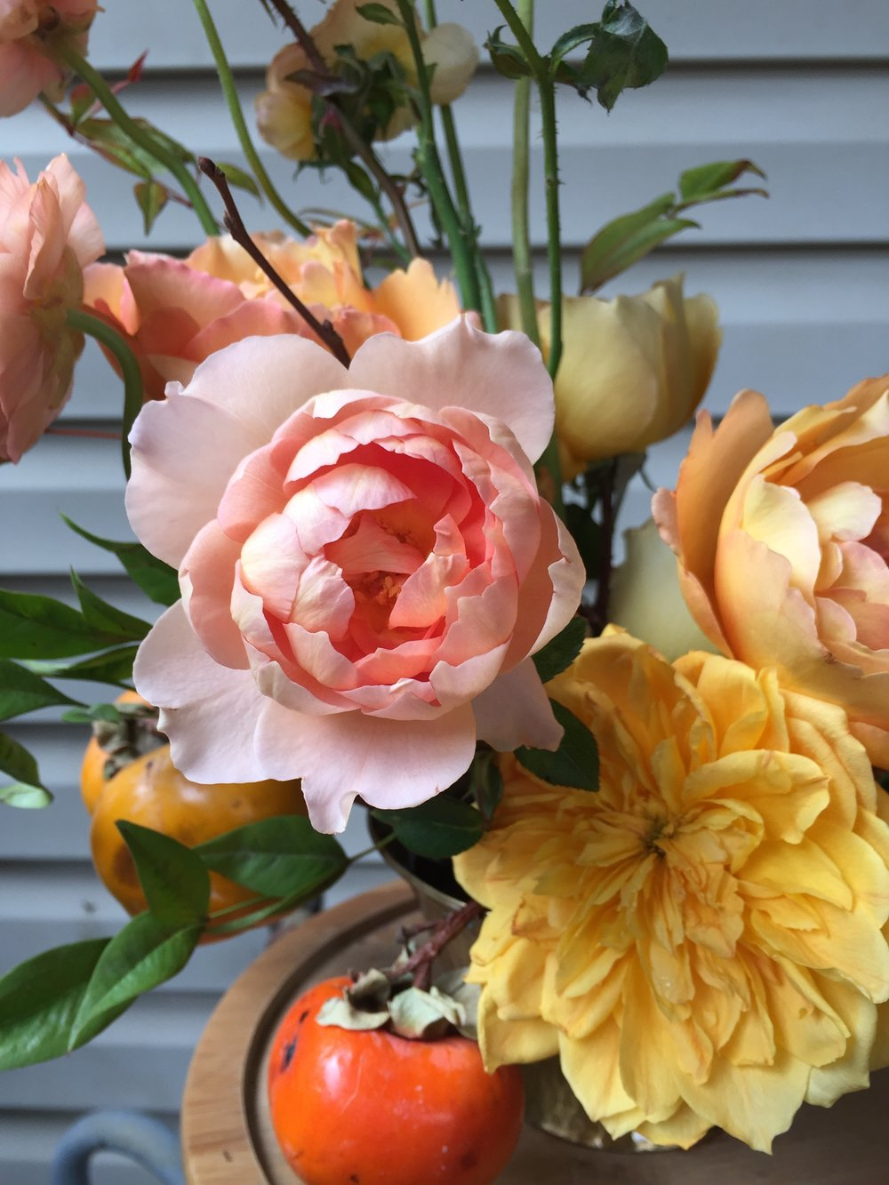 persimmons and garden roses | wild green yonder