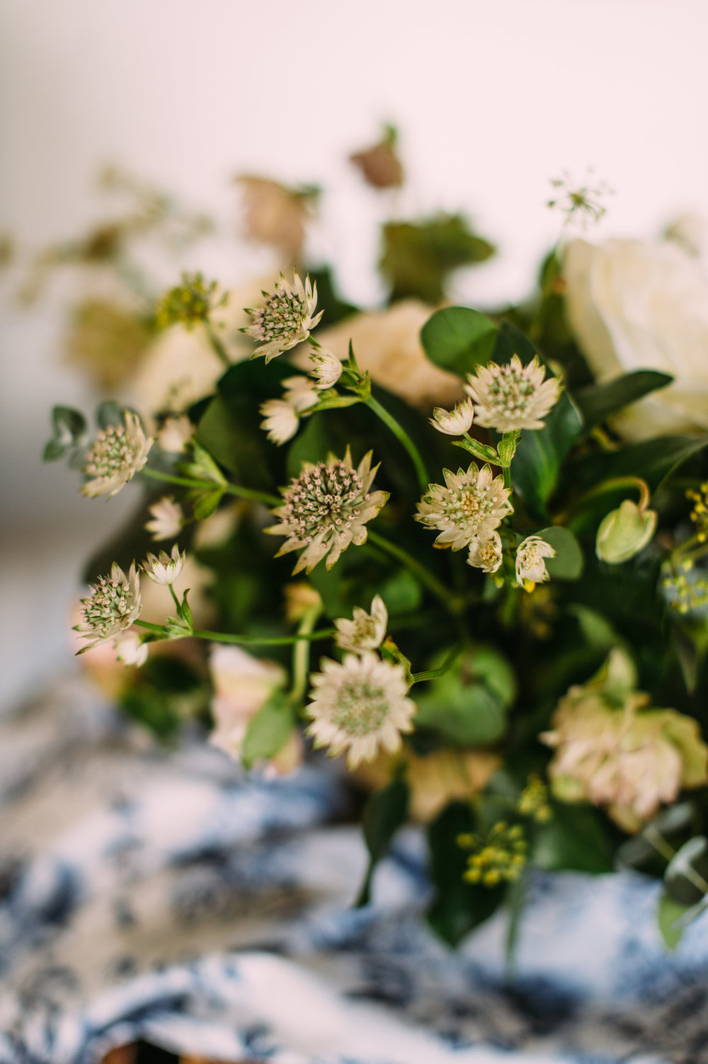 white astrantia by wild green yonder
