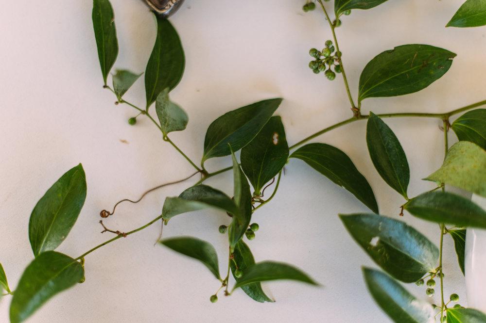 Smilax Vine by Wild Green Yonder