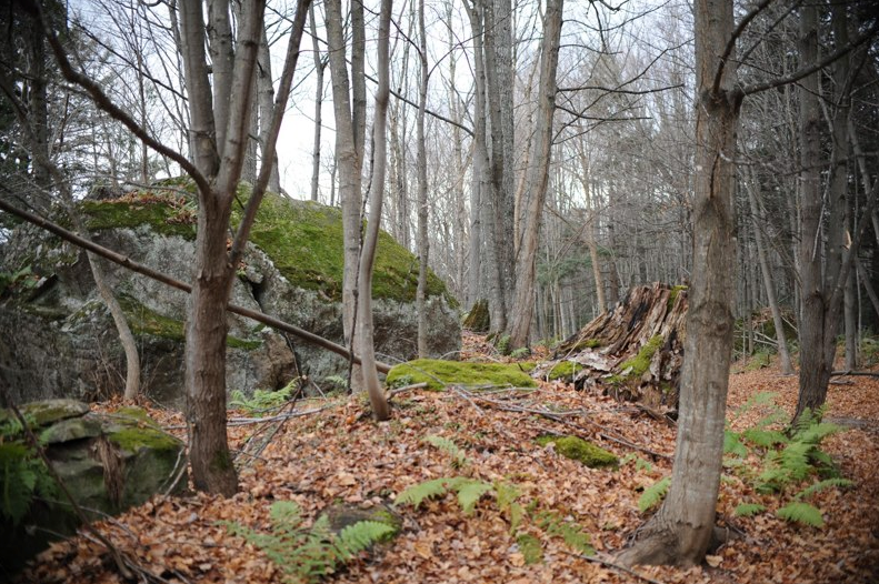 Landscape around cabin