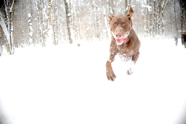 Canine Fun in Winter
