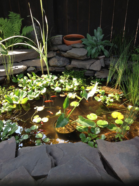 97 the saint james kingston patio garden tour koi pond 6.JPG