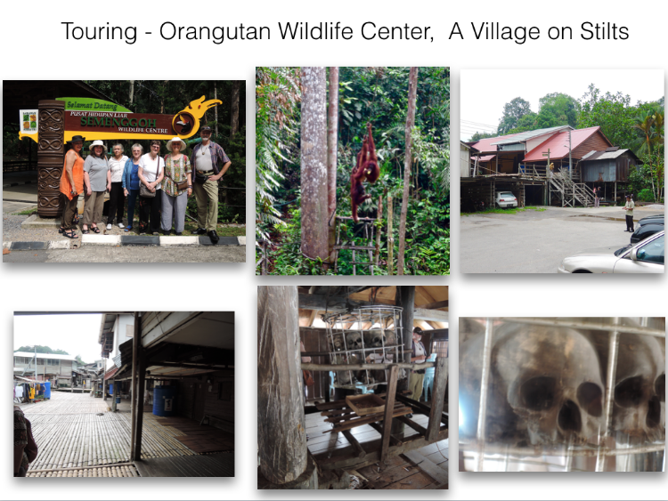 Here some of us are touring - 1st a Wildlife Center where Orangutans roam free as seen in the top center. 2nd to the right is the entrance to the villages/longhouses on stilts.  Amaing bamboo flooring and many housing units, plus sacrad skulls from head hunting times (bottom center and right