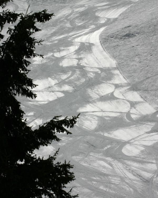 Skitree8x-web.jpg
