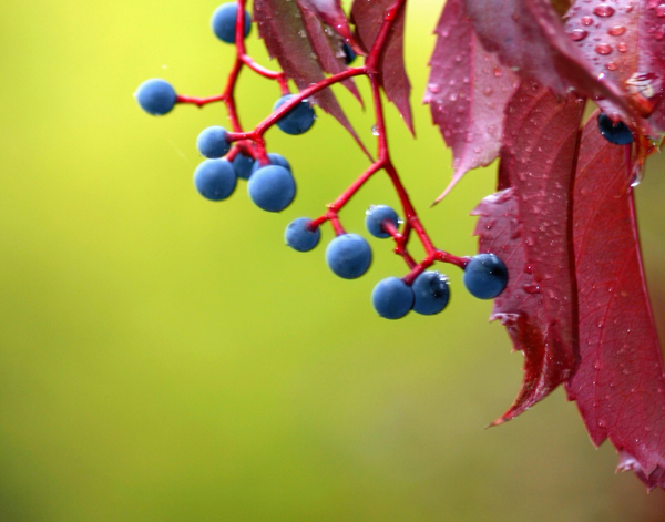 brightberry-web1.jpg
