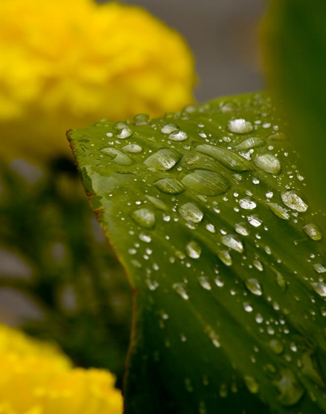 rainleaf-web.jpg