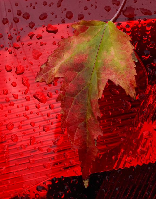 leaf-web1.jpg