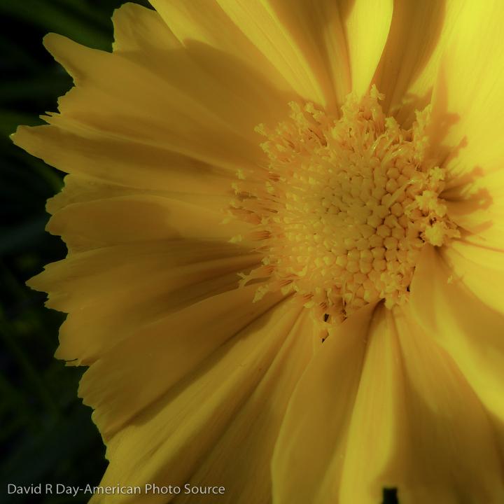 sunflower-1000874-2