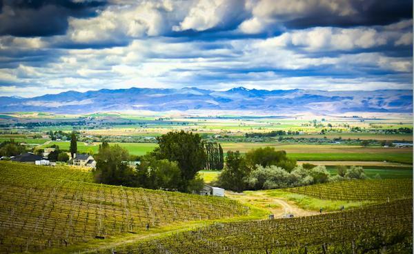wine-country-9296-8x-editweb