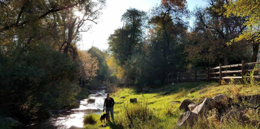 CreeksideDogWalk-855x425.jpg