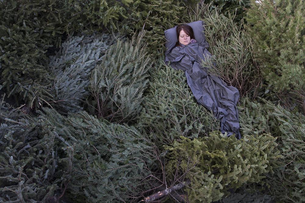 Spruce Slumber   2011