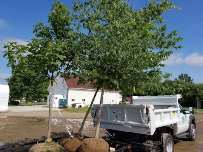 tree_planting_1.jpg