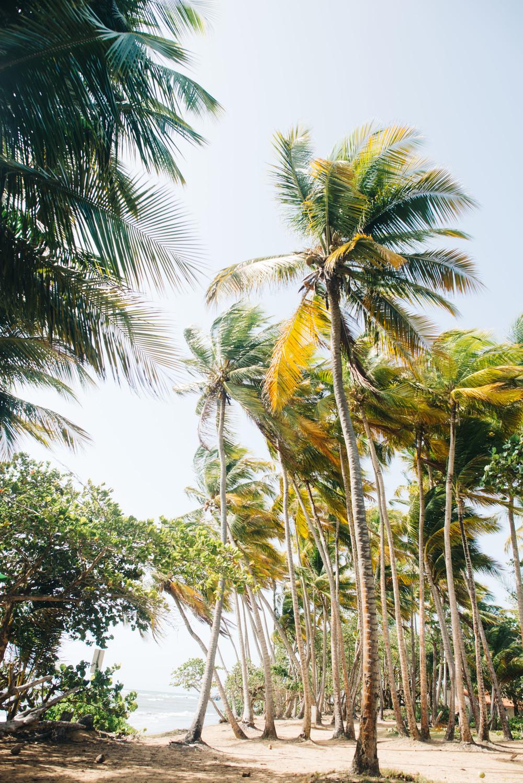 Puerto_Rico-75.jpg