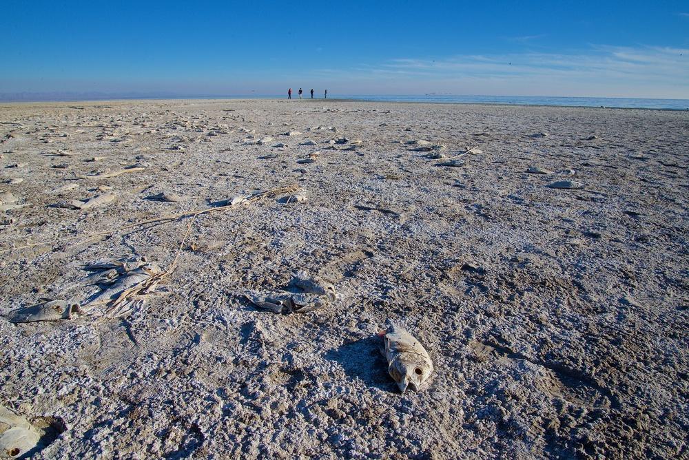 Sea of Dead Fish