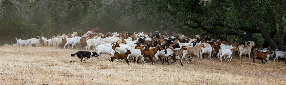 20180519 Goats-8646.jpg