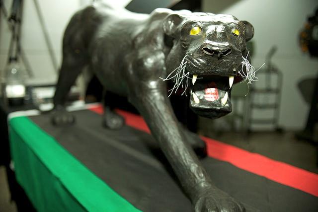 ##Panther.jpg