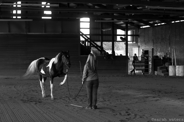 Valerie Carkhuff doing ground work with Moonshadow at the BHHR Riding and Training arena.