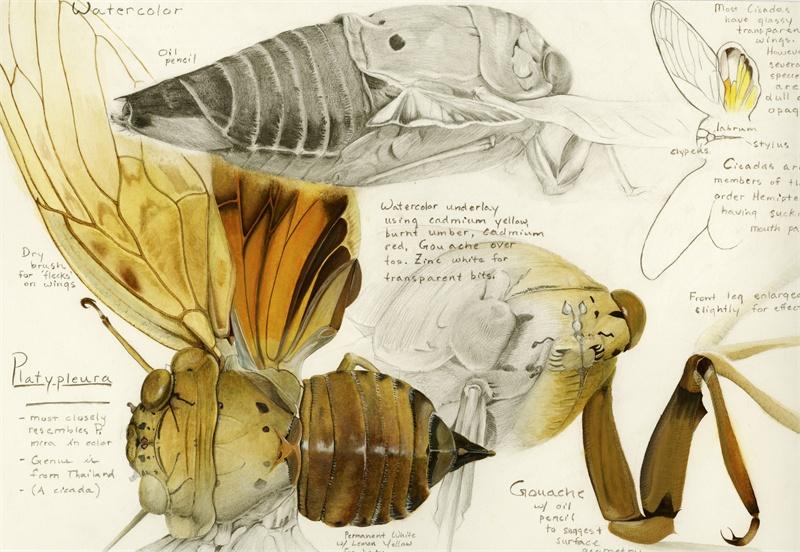 Cicada Comprehensive